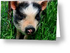 Oink-ing It Up... Greeting Card by Elizabeth Gray