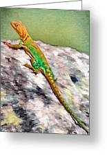Oklahoma Collared Lizard Greeting Card by Jeff Kolker