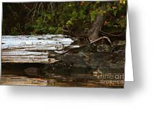 Old Broken Tree Greeting Card by Marjorie Imbeau