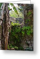 Old Jamaican Sugar Mill Greeting Card by Carol  Bradley