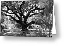 Old Plantation Tree Greeting Card by Melody Jones