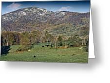 Old Rag Mountain - Shenandoah National Park - Virginia Greeting Card by Brendan Reals