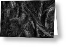 Old Silvery Roots Greeting Card by David Gordon