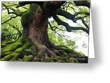 Old Tree In Kyoto Greeting Card by Carol Groenen