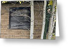Old Window And Aspen Greeting Card by James Steele