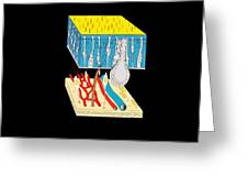 Olfactory Epithelium, Artwork Greeting Card by Francis Leroy, Biocosmos