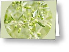 Olive O Greeting Card by Linde Townsend