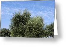 Olive tree in Provence Greeting Card by BERNARD JAUBERT