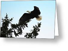 Olympic Bald Eagle Greeting Card by David Yunker