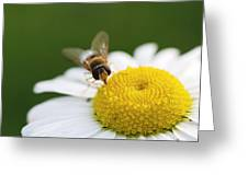 On A Daisy Greeting Card by Laura Melis