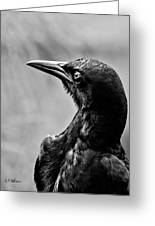 On Alert - Bw Greeting Card by Christopher Holmes