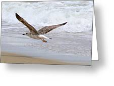 On The Wing At Nags Head Greeting Card by Paula Tohline Calhoun