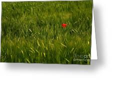 One Flower Greeting Card by Odon Czintos