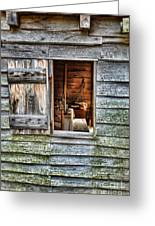 Open Window In Pioneer Home Greeting Card by Jill Battaglia