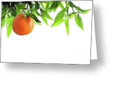 Orange Branch Greeting Card by Carlos Caetano