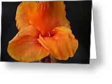 Orange Canna Lily Greeting Card by Melanie Moraga