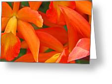 Orange Cattleya Orchid Greeting Card by Becky Lodes