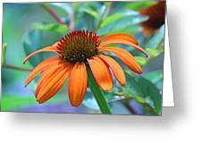 Orange Coneflower Greeting Card by Becky Lodes