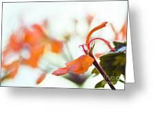 Orange Cranesbill Greeting Card by David Lade