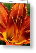 Orange Daylily Greeting Card by Bruce Bley