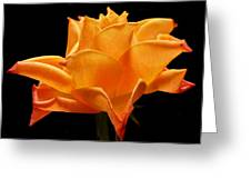 Orange Delight Greeting Card by Terence Davis