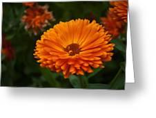 Orange Flower At The Manor Greeting Card by Noah Katz