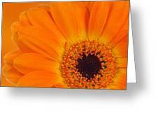 Orange Flower Greeting Card by Olavs Silis