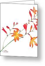 Orange Flowers Greeting Card by Muna Abdurrahman