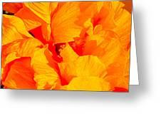 Orange Frills Greeting Card by Gwyn Newcombe