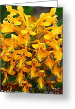 Orange Fringed Orchis Greeting Card by Barbara Bowen