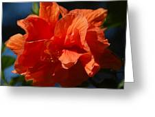 Orange Hibiscus Greeting Card by Aimee L Maher Photography and Art