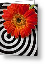 Orange Mum With Circles Greeting Card by Garry Gay