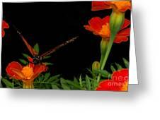 Orange On Orange Greeting Card by Lydia Holly