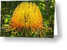 Orange Protea Flower Art Greeting Card by Rebecca Margraf