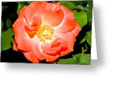 Orange Rose  Greeting Card by Ester  Rogers
