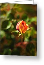 Orange Rosebud Greeting Card by Rebecca Sherman
