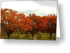 Orange Trees At Minto Brown Greeting Card by Katherine Adams