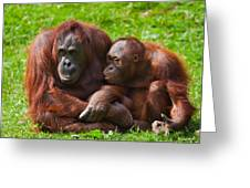 Orangutan Mother And Child Greeting Card by Gabriela Insuratelu