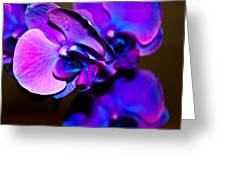 Orchid #2 Greeting Card by David Alexander