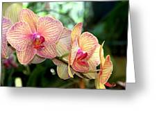 Orchid Delight Greeting Card by Karen Wiles