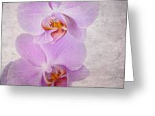 Orchid Greeting Card by Jane Rix
