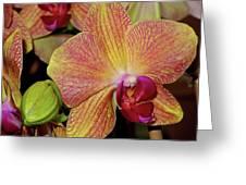 Orchid Greeting Card by Lynda Lehmann