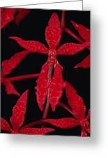 Orchid Renanthera Bella An Endangered Greeting Card by Mark Moffett