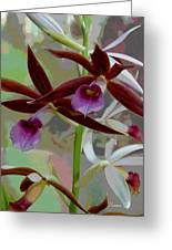 Orchid Sonata Greeting Card by Suzanne Gaff
