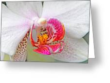 Orchids 10 Greeting Card by Becky Lodes