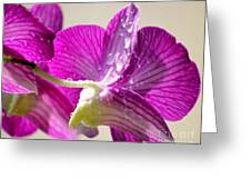 Orchids And Raindrops Greeting Card by Theresa Willingham