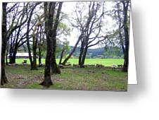 Oregon Sheep Farm Greeting Card by Will Borden