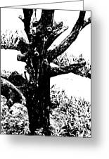 Ornamental Dead Tree By The Path Greeting Card by Kantilal Patel