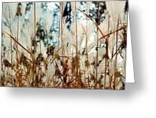 Ornamental Grass Greeting Card by Bridget Johnson