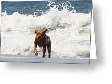 Out Of The Waves Greeting Card by Renae Laughner